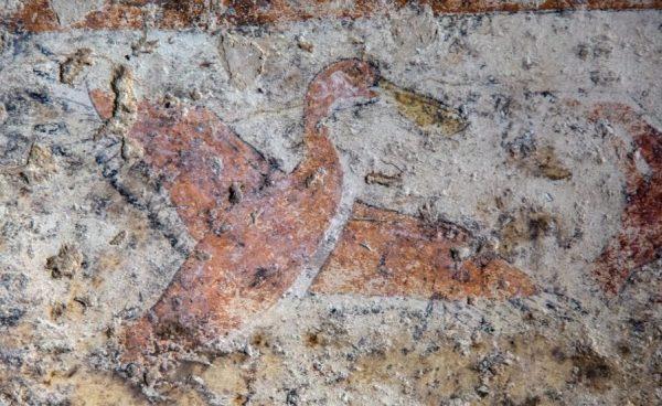 Pelikan w charakterystycznym dla tego zwierzęcia półskoku.