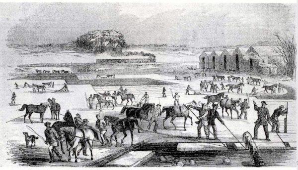 Lodowe żniwa w Massachusetts w połowie XIX wieku.