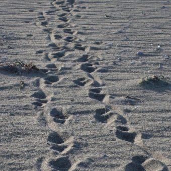 Ślady stóp spacerowicza (fot. domena publiczna)