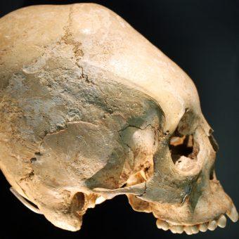 Czaszka z VI wieku, kultura alemańska