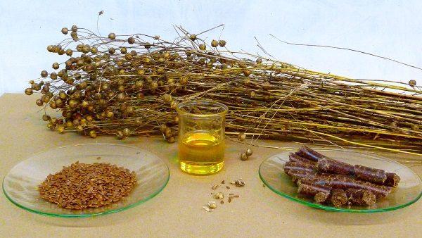 Olej lniany (fot. Handwerker, lic. CCA SA 3.0)