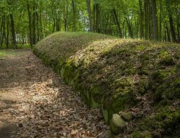 Park Kulturowy Wietrzychowice, kopiec kujawski (fot. Aga Viburno, lic. CC BY-SA 3.0)