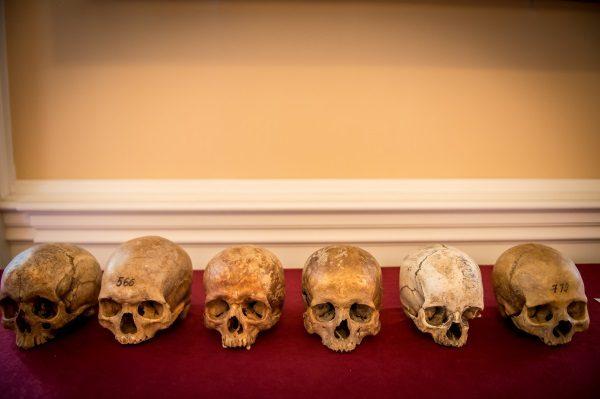 Czaszki analizowane na warsztatach antropologicznych (fot. Andrzej Owczarek, Dolnośląski Festiwal Tajemnic)