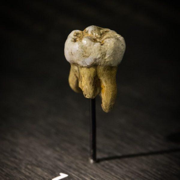 W jednej z jaskiń gór Ałtaju znaleziono ząb trzonowy przedstawiciela denisowianów.