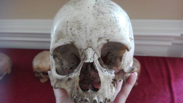 Jedna z czaszek analizowanych w trakcie warsztatwó (fot. Anna Winkler, TwojaHistoria.pl)