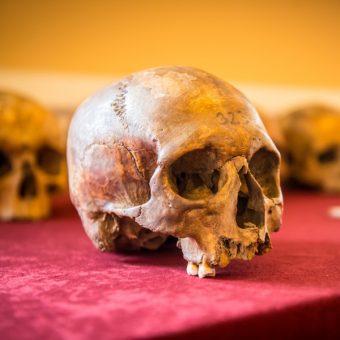 Materiał kostny analizowany w trakcie warsztatów antropologicznych (Fot. Andrzej Owczarek, Dolnośląskie Festiwal Tajemnic)