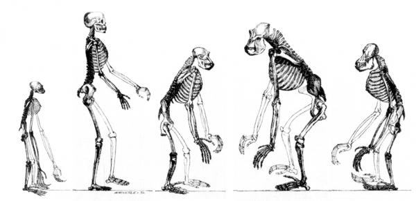 Teoria ewolucji na dobre zakorzeniła się w nauce. Wyrósł z niej szereg innych koncepcji naukowych i pseudonaukowych, w tym eugenika.