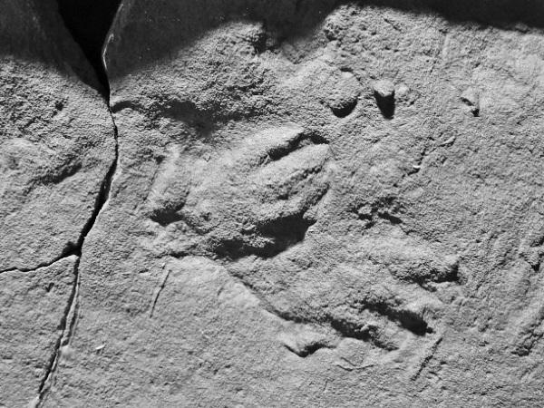 """W niewielkiej wsi Stryczowicach odkryto ślady przodka dinozaurów, prorotodaktylusa. Zdjęcie z książki Steve'a Brusatte'a pt. """"Era dinozaurów. Od narodzin do upadku""""."""