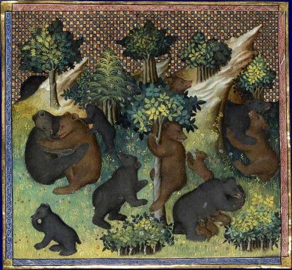 Schwytane w niewolę niedźwiedzie podróżowały z miasta do miasta. Wykorzystywano je do walk lub uczono różnych sztuczek. Miniatura z XV wieku.