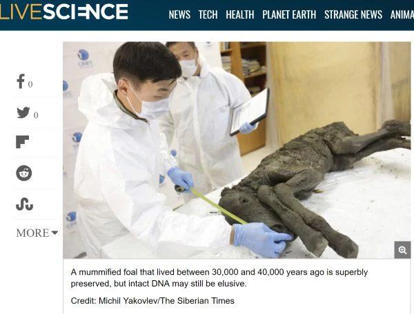 Znaleziony na Syberii źrebak (fot. screen materiału przygotowanego przez livescience.com)