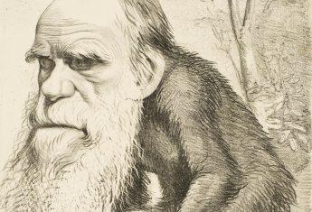 Teoria Darwina była komentowana także w prasie... między innymi przez karykatury, ukazujące głowę jej twórcy osadzoną na ciele małpy.