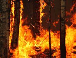 Wystarczyła jedna zbłąkana iskra, by wywołać największy pożar lasu w powojennej historii Polski i Europy.