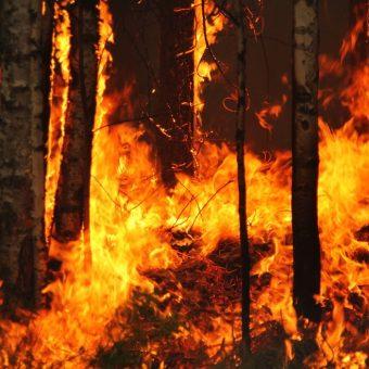 Wystarczyła jedna zbłąkana iskra, by wywołać największy pożar lasu w powojennej historii Polski.