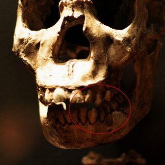 Czaszka neandertalczyka (fot. Jason M. Ramos, lic. CC BY 2.0)