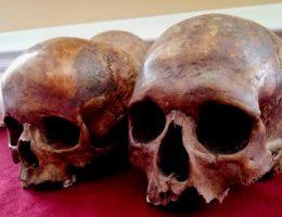 Ludzkie czaszki (fot. Aleksandra Zaprutko-Janicka, archiwum prywatne)