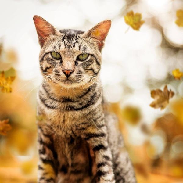 Kot (fot. Darwis Alwan, lic. CC0)