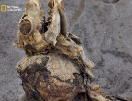 """Materiał na temat najnowszych odkryć związanych z peruwiańskim cmentarzyskiem dzieci ukaże się w anglojęzycznym wydaniu magazynu """"National Geographic"""" w lutym (zdj. pochodzi z """"Nathional Geographic"""")."""
