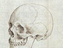 """Szkic czaszki, należącej do przedstawicielki """"rasy kaukaskiej""""."""