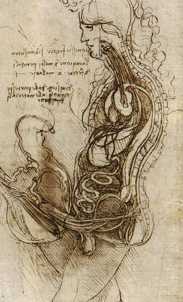 Coitus na rysunku Leonarda Da Vinci (fot. domena publiczna)
