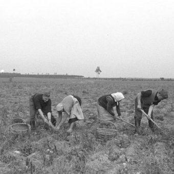 Polscy chłopi w lecie 1939 roku.