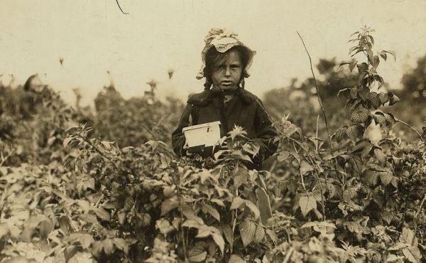 Kilkuletnie dzieci pracowały przy zbieraniu owoców. Zdjęcie poglądowe.