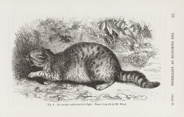 W swojej pracy Darwin porównywał emocje ludzi i zwierząt.