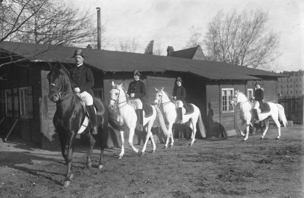 W Hostau zastano blisko 1200 koni, w tym 400 lipicanerów