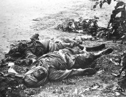 Podczas bitwy o Tangę Niemcom z odsieczą przybyły... pszczoły